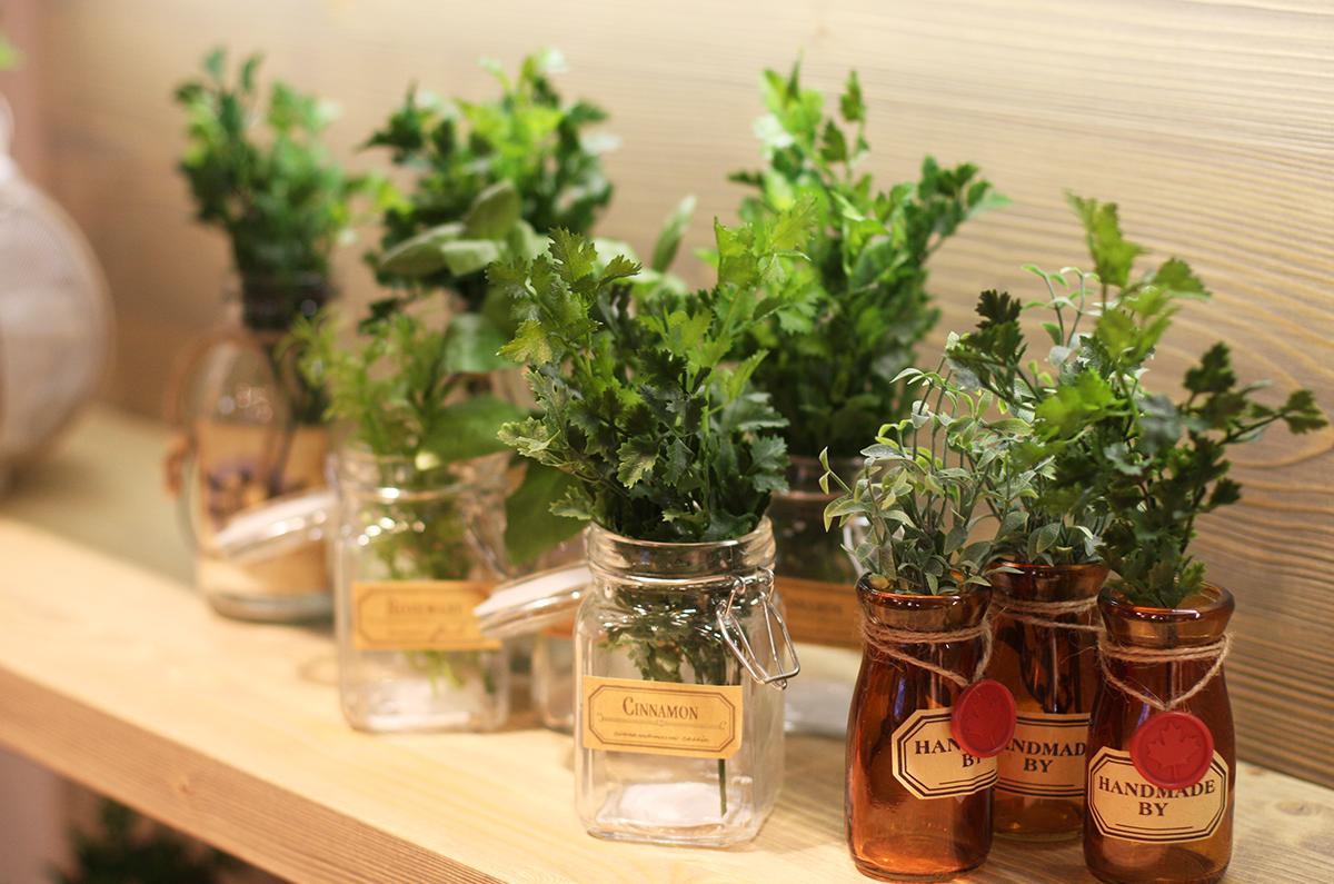 Le Piante Aromatiche : Coltiviamo insieme le piante aromatiche