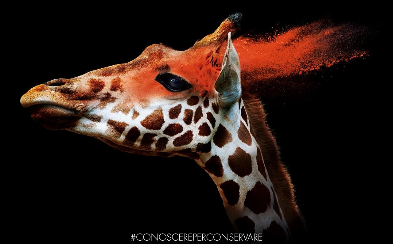 giraffa-e-cpc