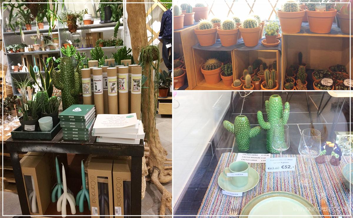 design-casa-home-cactus-belgio