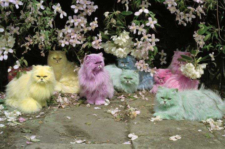 Gatti persiani color pastello di Tim Walker