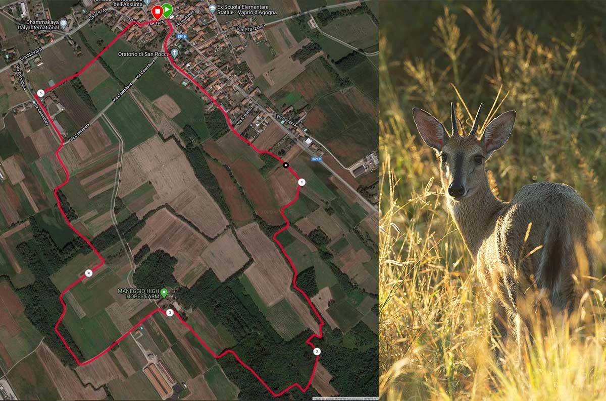 Correre a Novara tra cavalli e caprioli